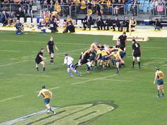 Bledisloe Cup 2009