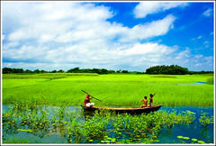 In the land of landscapes - VII [..Sonargaon, Bangladesh..] (Catch the dream) Tags: life blue sky green nature water field clouds children landscape boat weeds village rice paddy bongo azure vista bengal bangladesh boatman endless bangladeshi narayanganj barodi gettyimagesbangladeshq2