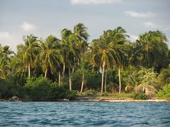Paradise Island (AniSuperNova83) Tags: ocean sea america palms island colombia paradise dive diving palmeras atlantic caribbean isla paraiso buceo caribe palmas atlantico suramerica paradisiaco islasdesanbernardo supernova83 golfodemorrosquillo anisupernova tintipan 2009ago17