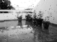 Enjoying a rainy, afternoon on Sunday (anita gt) Tags: bw white black blanco water lumix drops agua afternoon negro bn gotas rainy bianco nero tarde lluviosa lx3