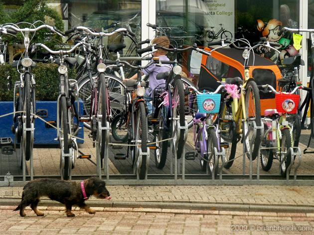 P1050411_dog_bikes