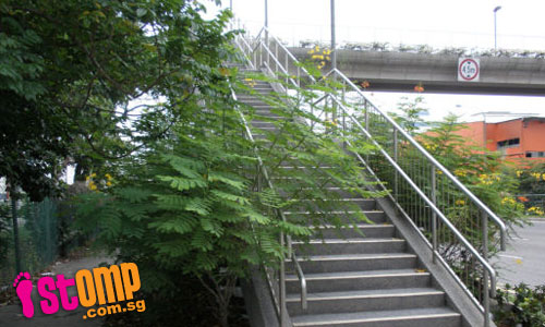Jalan Buroh overcrowded with plants and covered in litter
