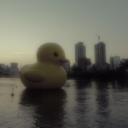 16518 : Ahiru-chan :)