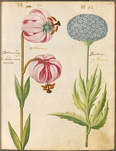 Hortulus Monheimensis 00095