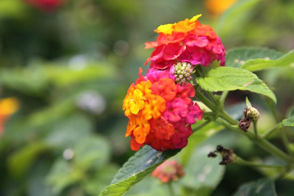 092609_flower_05