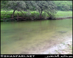Darbat Lake (Shanfari.net) Tags: flowers plants nature cow cows natural ericsson sony greenery cave oman salala zufar salalah sultanate dhofar  khareef     dufar  taqah     governate  dhufar  darbat taiq c905 dofar  raythut  thofar thufar