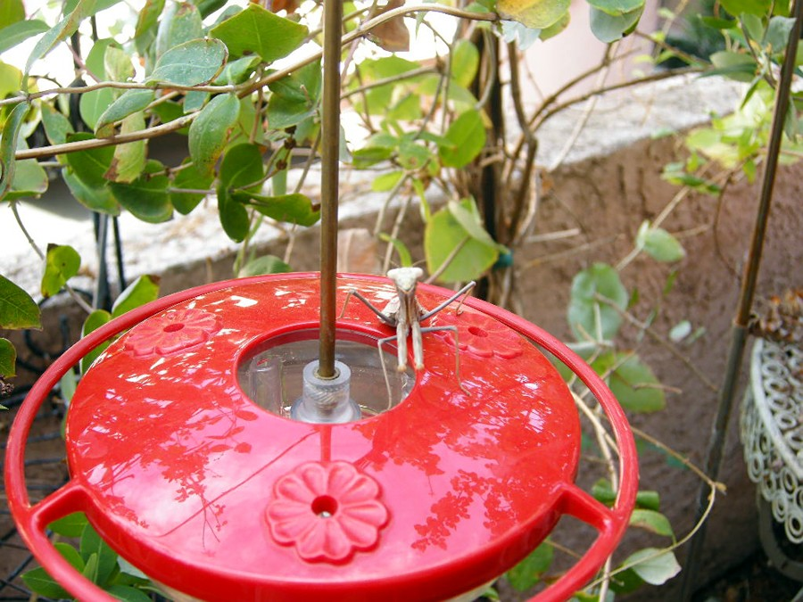 mantis Hummingbird feeder 1-2