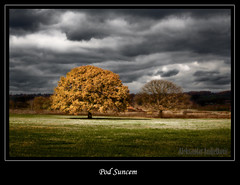 (Aleksandar Andjelkovic) Tags: autumn trees tree fall serbia cloudscapes srbija cacak drvo jesen imagepoetry drvece aleksandarandjelkovic jediphotographer artofimages flickraward bestcapturesaoi bestofmywinners elitegalleryaoi flickraward5 podsuncem flickrawardgallery blinksuperstars aleksandarandjelkovicphotography aleksandarandjelkovicfotografije