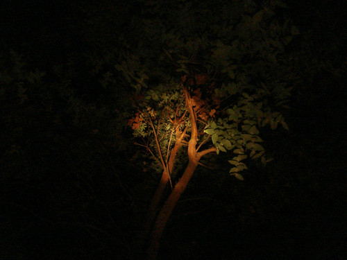 Torchlit Tree