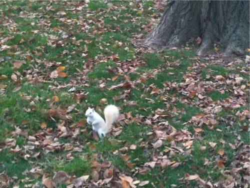 The White Squirrel of Death