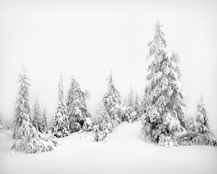 white forest (H o g n e) Tags: wood trees winter bw cloud snow norway clouds forest dark landscape landscapes blackwhite frost january explore snowfall coolscan blefjell fe2 explored winterforest bildekritikk pprowinner