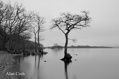 Milarrochy Bay, Loch Lomond. (Alan Cosh) Tags: uk mist lake tree water scotland loch lochlomond milarrochybay millarochybay