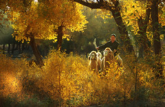2119 Camel rider among yellow leaves--Inner Mongolia , China (ngchongkin) Tags: china beautiful niceshot fourseasons mostinteresting 1001nights breathtaking nationalgeographic sino musictomyeyes inthemood hiddentreasure totalphoto topseven anythingyoulike platinumphoto todaysbest peaceaward thenumberone avpa agradephoto flickraward flickrbronzeaward heartawards allxpressus diamondstars themagickey flickrestrellas thebestshot grouptripod doubledragonawards artofimages angelawards thebestvisions contactaward ablackrose passionoftheheart flickrsgottalent bestpeopleschoice mygearandme bishopsandpawns imperialimages fabulousphotographyaward thecooldiamond fabulousplanetevo soniagallery soulocreative