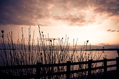 ~evening on the bay. (CarolynsHope) Tags: light sunset sky water colors silhouette clouds fence evening bay purple lbi longbeachisland tones twigs muted