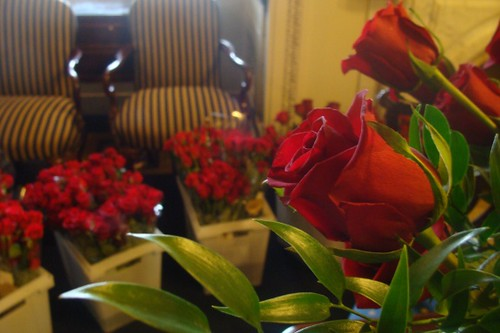 Roses for Speaker Pelosi's Birthday by Speaker Pelosi.