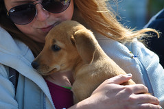 12135 (Panegyrics of Granovetter) Tags: puppies adorable cuteness amphipolis