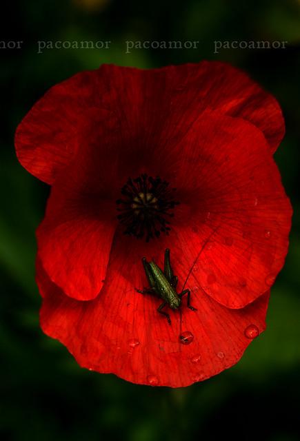Greenger & Red