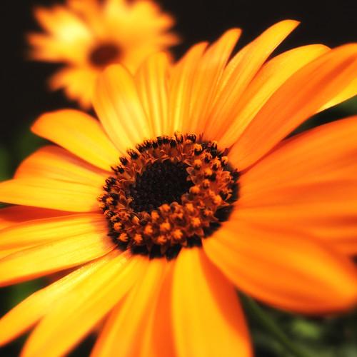 2011.06.24(R0010323_GX100_Glamour Glow