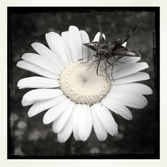 park summer blackandwhite bw white black flower color art... (Photo: xwhiteboy777x on Flickr)