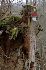 Kamegg (Harald Reichmann) Tags: niederösterreich kamptal kamegg wald markierung holz zeichen wegweiser moos farbe verwitterung erosion