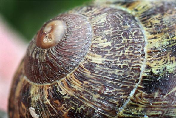 063009_snailShell
