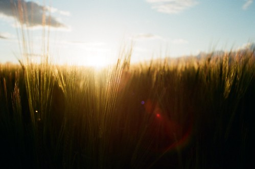 Been Having Fun With Sunsets And Fields I Really