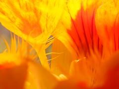 flames (>^..^< maggz >^..^<) Tags: pink blue red orange plants brown sun white plant sunshine rain yellow bug garden warm perfume legs gardening flames feathers grow cream feather warmth stamens growth flame smell stamen passion breeze spurt scent cornflower gardener feathery