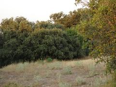 Si visitas las tierras de Almenara, no olvides la cmara por que te arrepentirs (andaluza catalana) Tags: arboles pasto bosque rbol campo catalunya montaa tierra lleida piedra lerida camaradefotos almenara arbusto colorverde lurgell colordorado