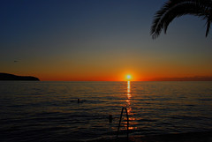 Sunset in Izola (Sareni) Tags: light sunset sea summer vacation sky sun tree bird beach water colors clouds reflections lights evening nikon waves seagull july palm explore more slovenia slovenija swimmers 2009 adriatic isola jadran twop izola d60 nikond60 jadranskomore sareni