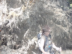 huge tree root system (audrey_hagen) Tags: tetons cascadecanyon paintbrushcanyon