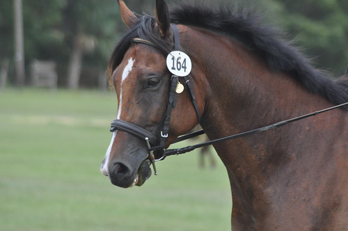 rocking horse 188