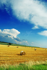Fields (ingephotography) Tags: blue sky germany deutschland gold fields vangogh duitsland ihavenoideawherethisis fbdg