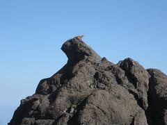 Marmot throne
