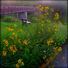 A place to rest near to the river (moodyfan (Julie)) Tags: flowers river bench footbridge wildflowers legacy blackeyedsusans tistheseason yaharariver coth abigfave flickrdiamond homersiliad travelsofhomeorodyssey