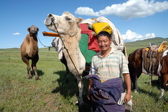 TRUCKING IN MONGOLIA (Claude  BARUTEL) Tags: mongolia camel nomad trucks trucking steppe drivers