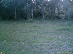 SUNP0037 (Ranger Bob) Tags: camera trail bushnell stand2