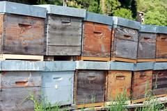 Ruches artisanales pour la récolte de miel en Cévennes miam miam