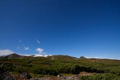 コマクサ平より表大雪の稜線を望む