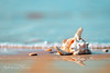reflections of summer... (alvin lamucho ©) Tags: ocean blue sea summer reflection dof bokeh stones middleeast shell wave pebbles kuwait fahaheel canon450d canonrebelxsi alvinlamucho