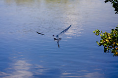 IMG_5041 (photo_mario) Tags: usa tourism trave nynewyork