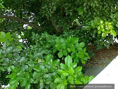 Greenery After Monsoon In Ahmedabad 2