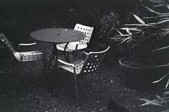 Backyard (samsa_joe) Tags: bw400cn holga135