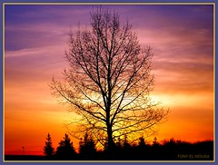 Calgary Another day.. (TONY - M) Tags: morning red sky orange canada black tree calgary nature yellow clouds sunrise dark hope day peace silhouettes olympus alberta wishes newday naturelovers anotherday naturefriends treesubject