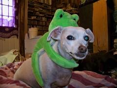 Quasi has his frog