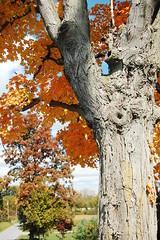 Ohio-Fall 2009