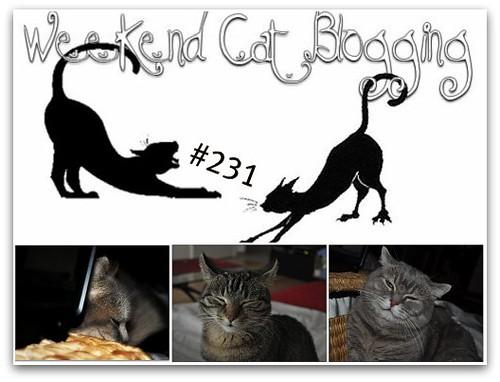 Weekend Cat Blogging #231