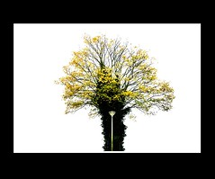 Autumn / Herfst (Theo Kelderman) Tags: autumn tree haarlem netherlands canon herfst nederland boom 2009 schalkwijk theokeldermanphotografie