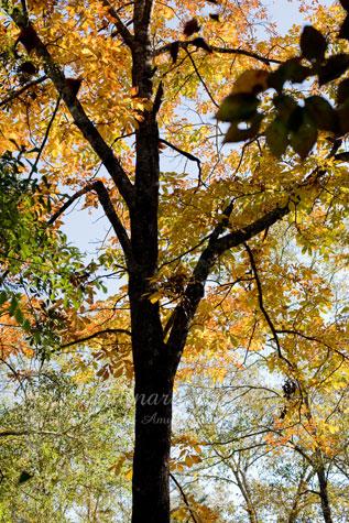 Fall_Nov072009_0002web