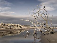 Winter at Kinshaldy (tricycledteenager) Tags: tree beach nature reflections scotland sand frost fife tide experiment bank grasses tidepool winterscene standrewsbay tentsmuirforest wintereffect kinshaldybeach blendedinfraredcoloureffect pseudofrosteffect