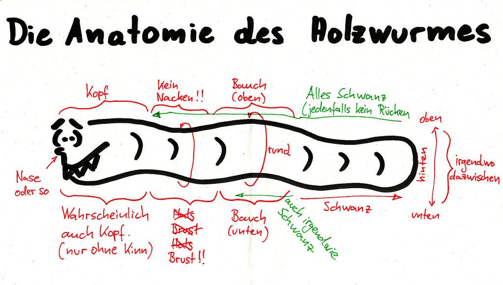 Fein Anatomie Der Welt Fotos - Menschliche Anatomie Bilder ...